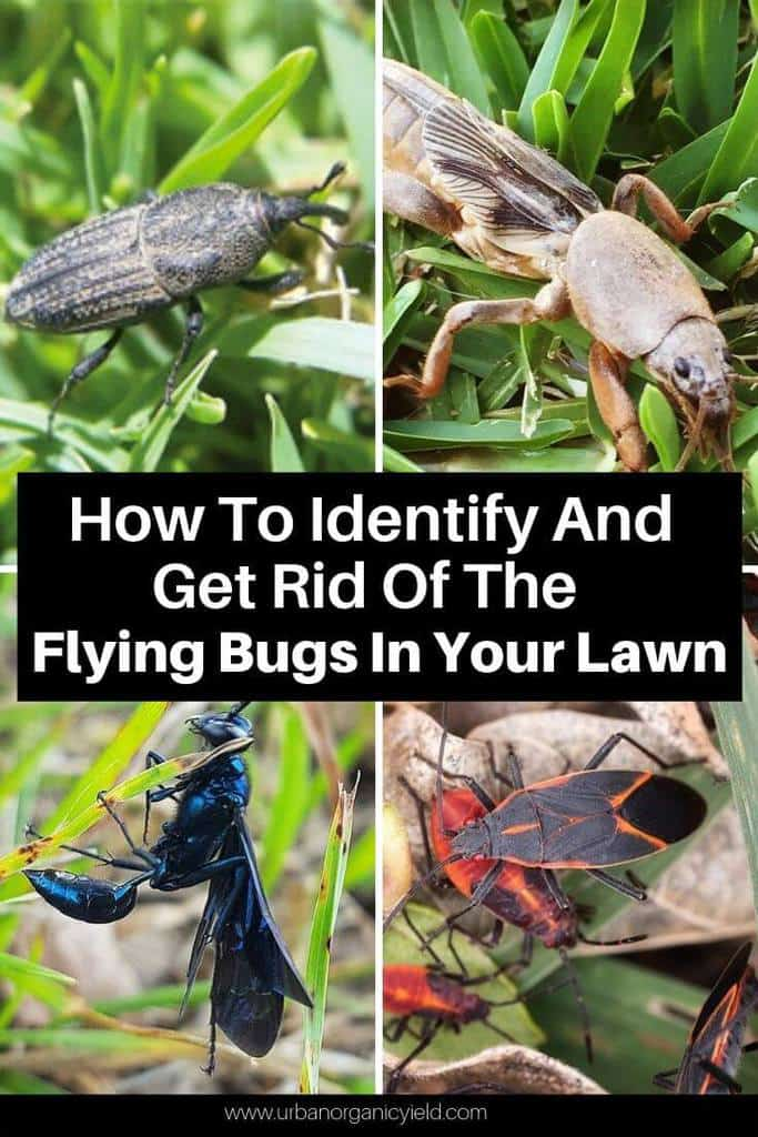 How To Identify And Get Rid Of The Flying Bugs In Your Lawn