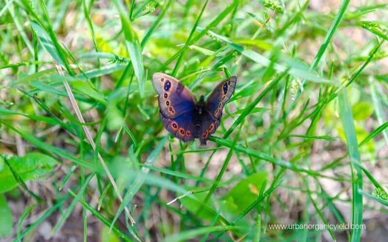 Lawn Moths