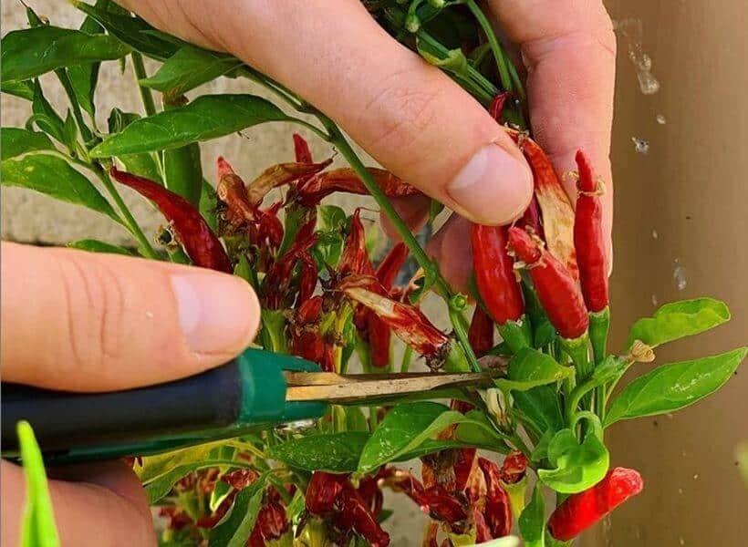 Pinching And Pruning