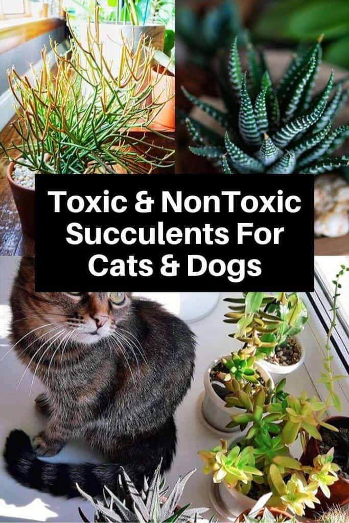 Toxic and Non-Toxic Succulents for Cats and Dogs