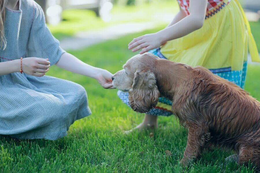 When Is My Lawn Safe For Kids And Pets After Fertilizing?