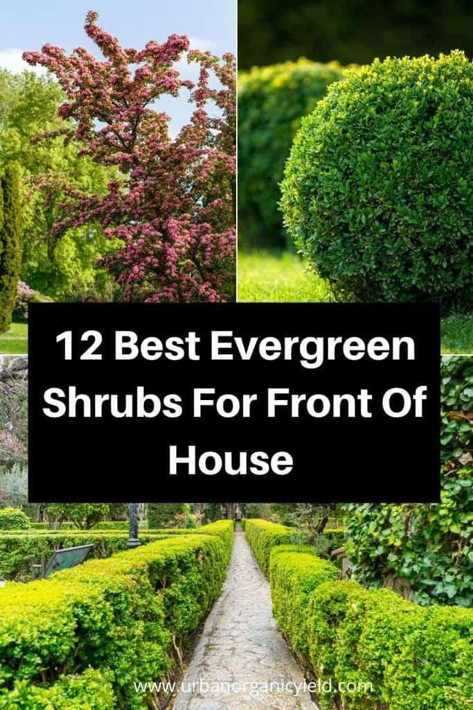 12 Best Evergreen Shrubs For Front Of House