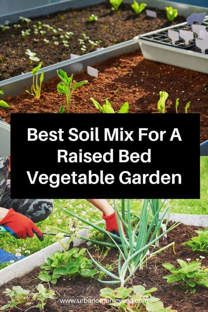 Best Soil Mix For A Raised Bed Vegetable Garden