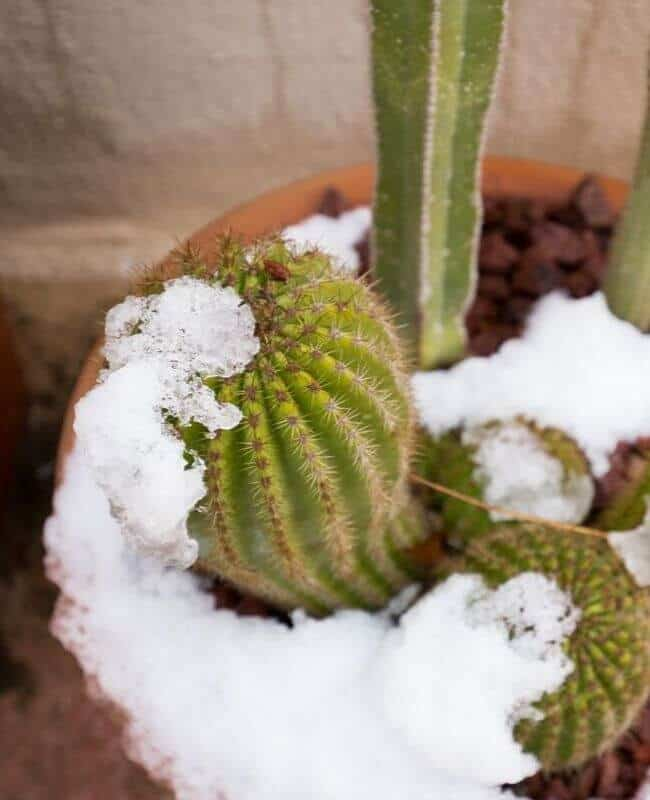 How Often Should I Water My Cactus In Winter