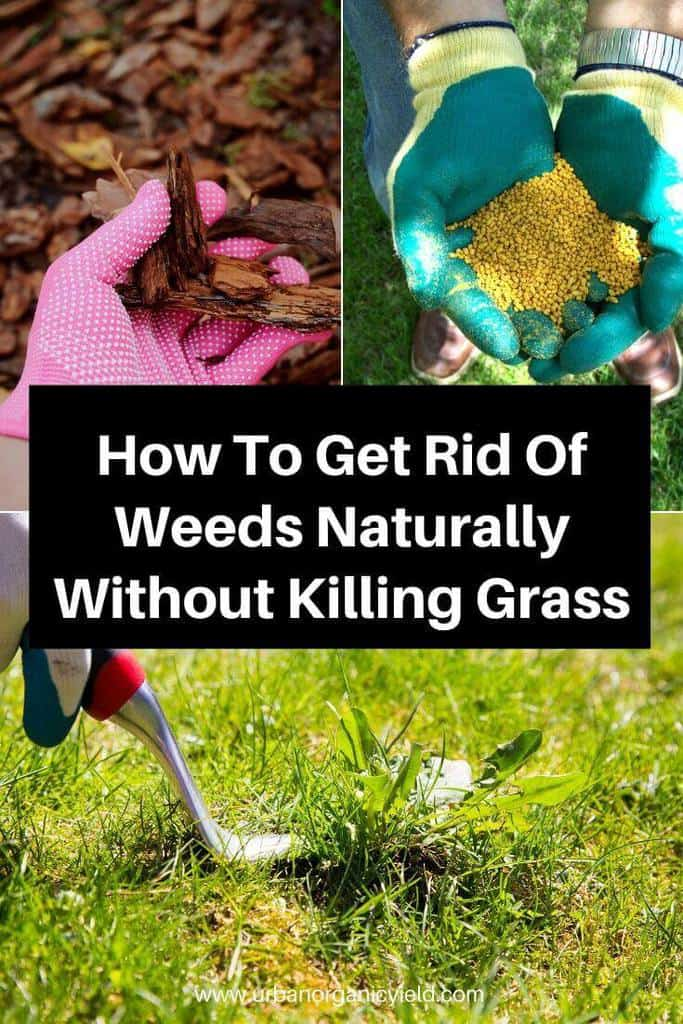 How To Get Rid Of Weeds Naturally Without Killing Gr